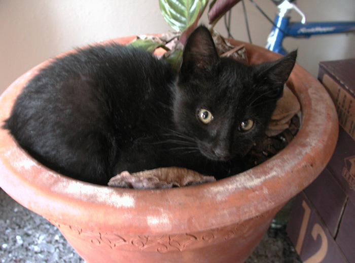 Shadow in a flowerpot; reminds him of home.