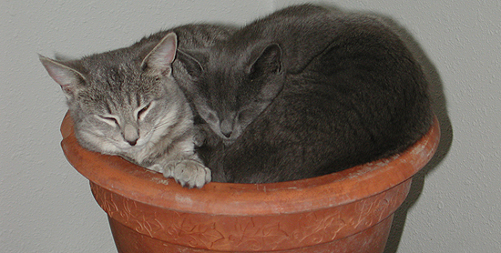 Cleopatra & Cricket asleep in a flowerpot