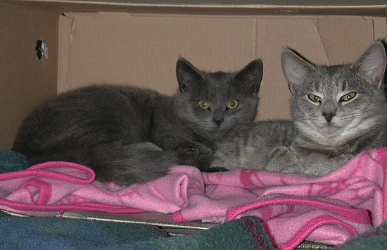 Cleopatra & Cricket in a Box